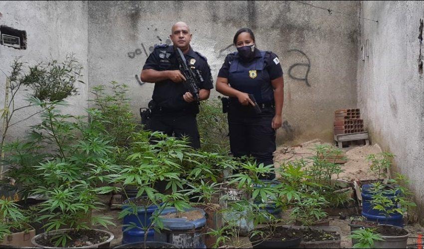 GCM de Jandira prende indivíduo que cultivava 36 pés de maconha