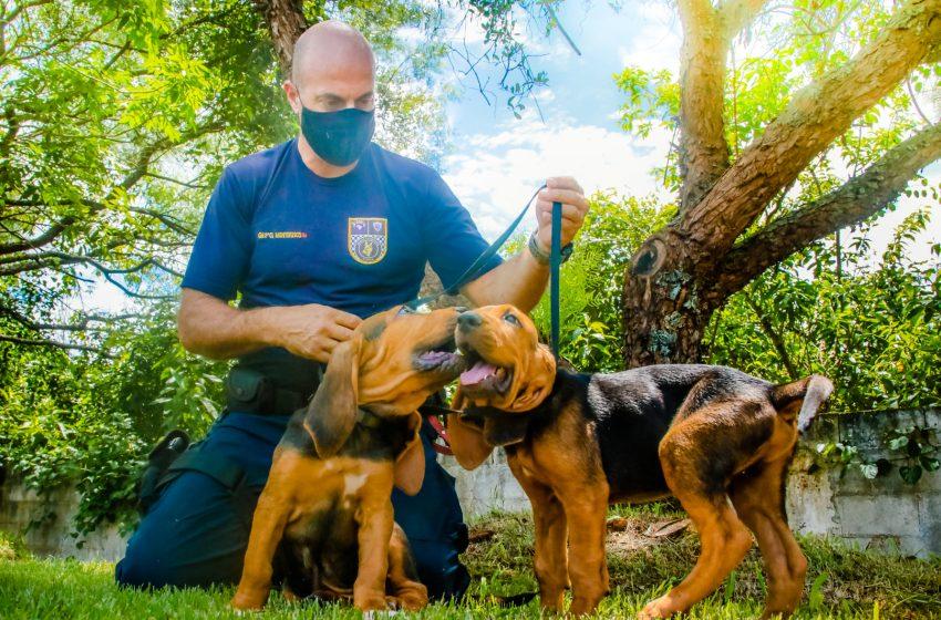 Canil da Guarda Municipal de Santana de Parnaíba ganha reforço